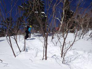 合戦沢の頭までの登山道をローアングルで。