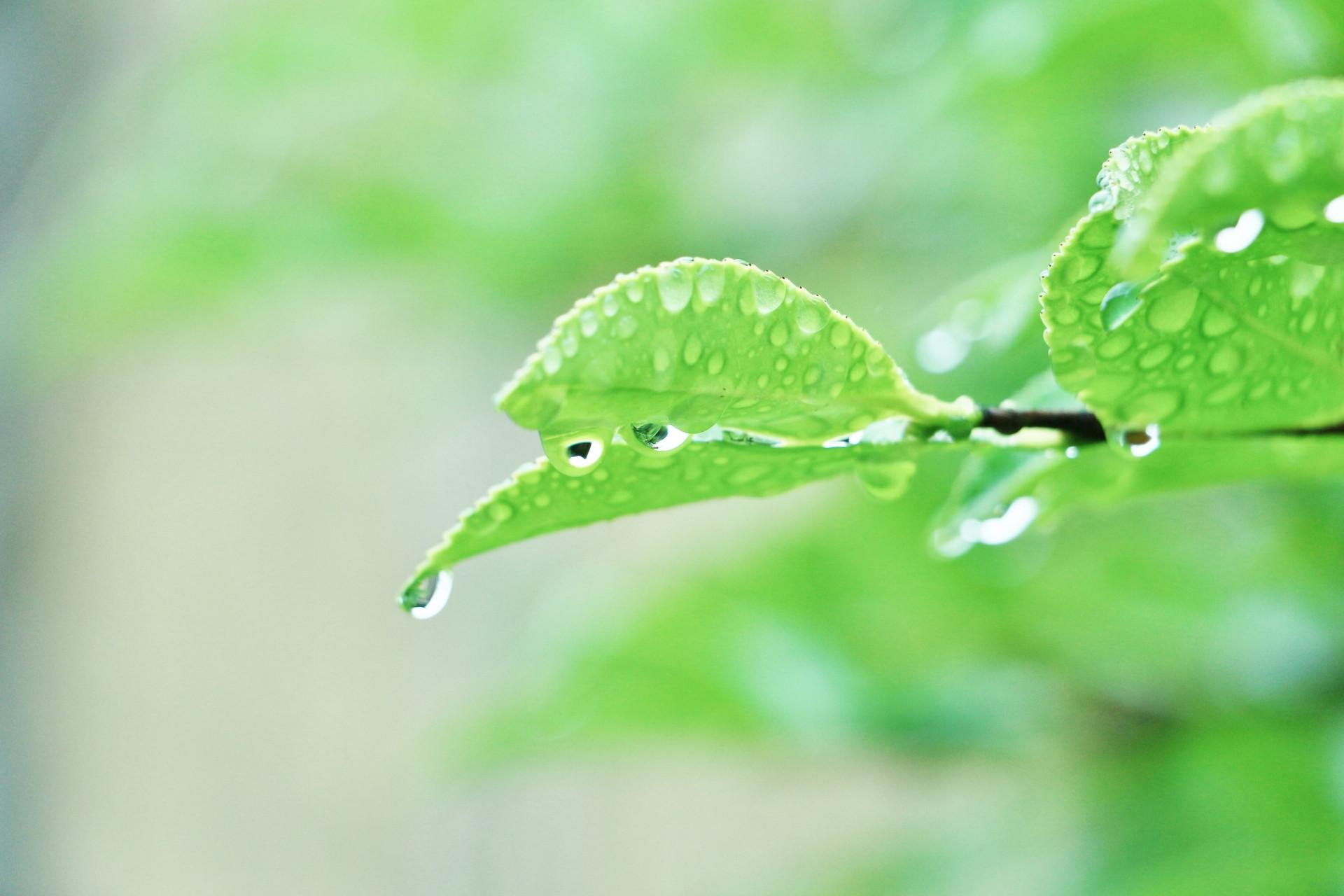 yama-rainyday