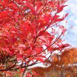 今秋から始める紅葉ハイキングがおすすめ