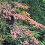 【最新紅葉情報】東北福島・安達太良山の紅葉レポート