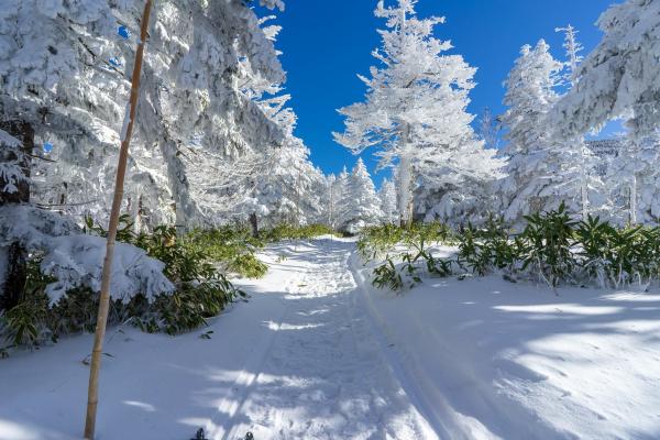 雪山デビューにおすすめ!快晴の北横岳登山レポート