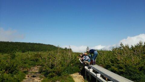 高めの木道が設置された高原の写真