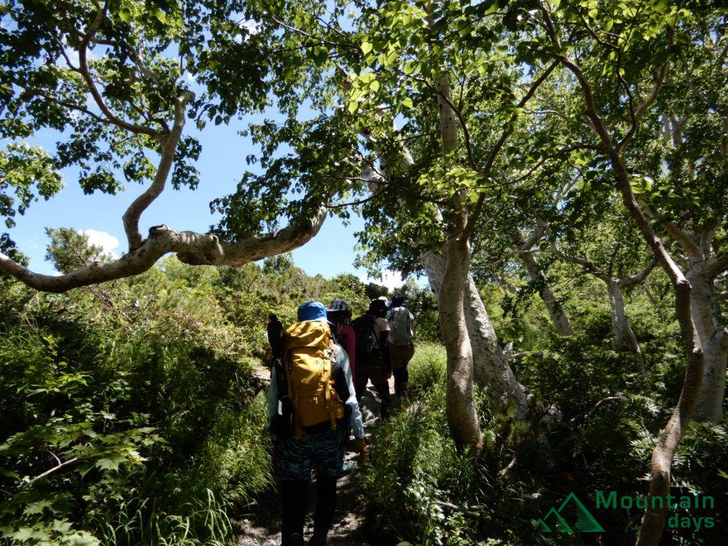 ほとんど森林限界のコース唯一の樹林帯